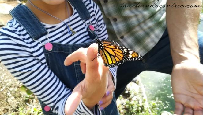 Mariposa monarca en Palmetum